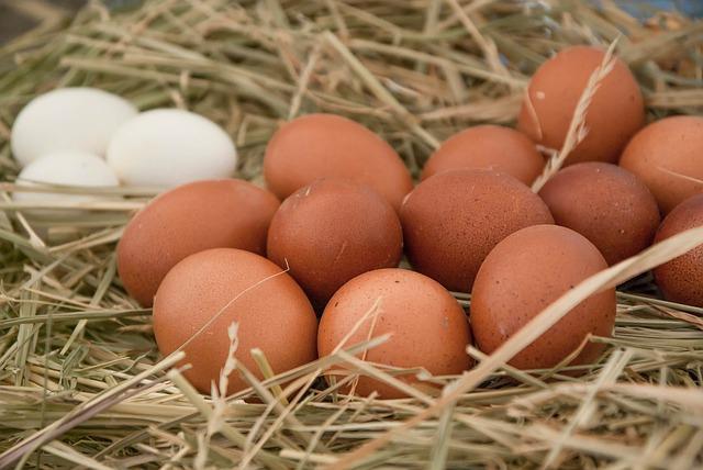 maseczka z jajkiem na włosy